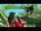 Красивое видео о природе)