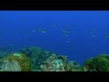 Морские виды / Visions of the Sea (2007)